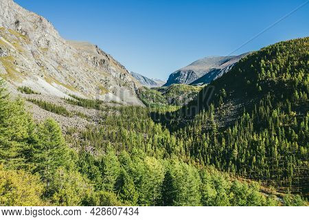Scenic Sunny Alpine Landscape With Narrow Valley And Green Mountains With Coniferous Forest Of Larch