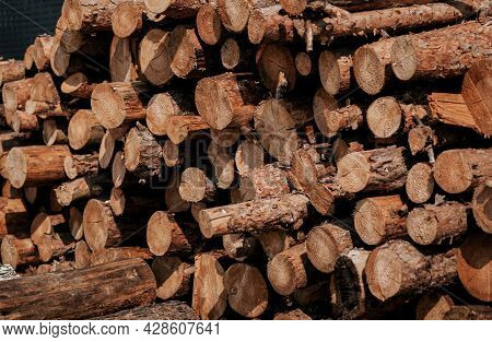 Forest Pine And Spruce Trees. Log Trunks Pile, The Logging Timber Wood Industry. Tree Stump Backgrou