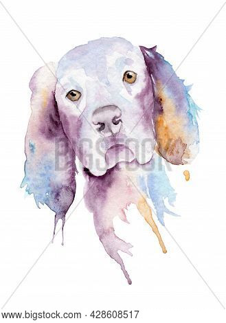 Watercolor Drawing Of A Pet - Dog. Cocker Spaniel.