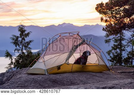 Adventurous Little Hiking Dog On Top Of A Mountain In A Tent With Scenic Canadian Nature Landscape I