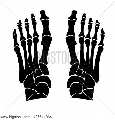 Anatomical Structure Of The Bones Of The Foot. Black Silhouette. Vector Illustration.