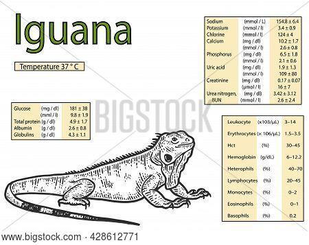 Blood Parameters In The Green Iguana. Veterinary Medicine.