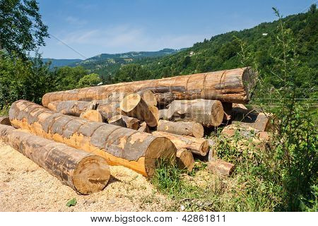 Lumber In Mountains