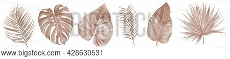 Dried Bohemian Watercolor Autumn Floral Leaf Set In Rustic Style. Dry Tropical Monstera And Palm Lea