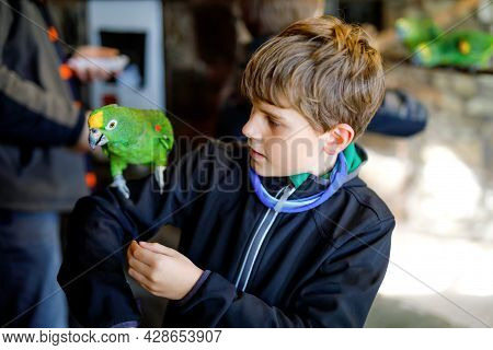 Gorgeous School Kid Boy Feeding Parrots In Zoological Garden. Child Playing And Feed Trusting Friend