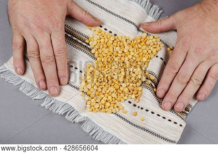 Dried Yellow Uncooked Peas Lie On A White Ethnic Fringed Towel. A Portion Of Beans And A Man's Hands