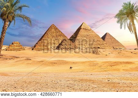 Famous Great Pyramids Of Egypt Behind The Palms, Giza, Cairo District