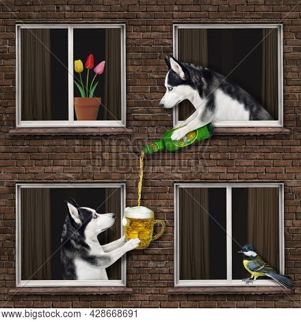 A Dog Husky Is Leaning Out Of The Window And Pouring Beer Into A Mug Of His Neighbor Of The Their Ho