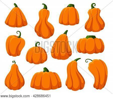 Cartoon Pumpkins. Isolated Pumpkin, Autumn Harvest Fresh Gourds. Happy Halloween And Thanksgiving Ti