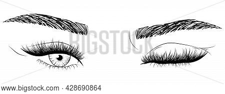 Hand Drawn Woman's Sexy Makeup Look With Perfectly Shaped Eyebrows And Lashes. Vector Illustration F
