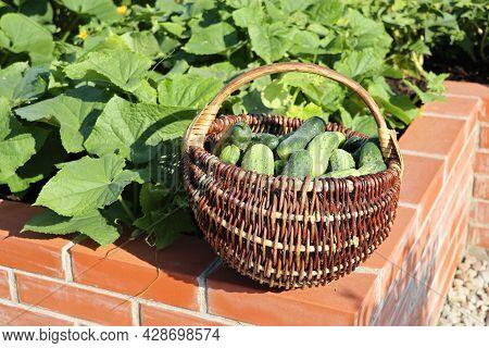 A Modern Vegetable Garden With Raised Briks Beds . .raised Beds Gardening In An Urban Garden Growing