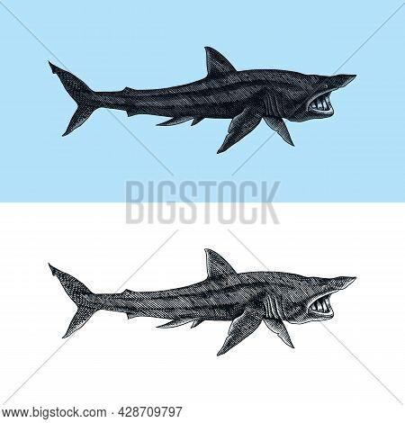 Basking Shark And Sand Shark. Marine Predatory Animal. Sea Life. Hand Drawn Vintage Engraved Sketch.