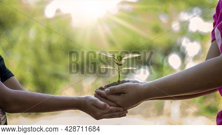 Two Human Hands Are Planting Saplings Or Trees In The Soil With Earth Day Environmental Conservation