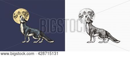 Gray Wolf Howling. A Predatory Beast And The Moon. Wild Forest Animal. Vector Engraved Hand Drawn Vi