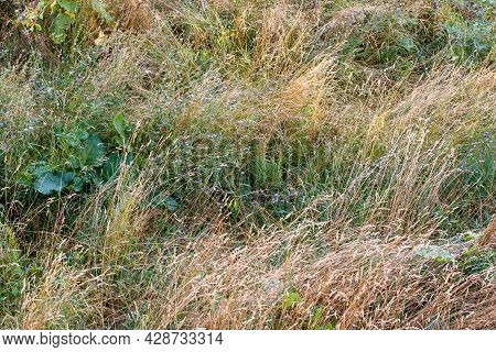Mixed Wild Green And Dry Yellow Grass Late Summer Afternoon