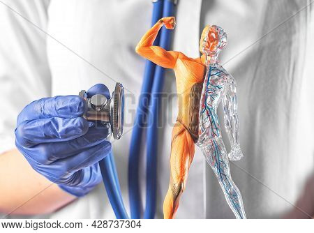 Medical Check-up Concept. Doctor Hands Listening Human Model With Stethoscope. Healthcare.
