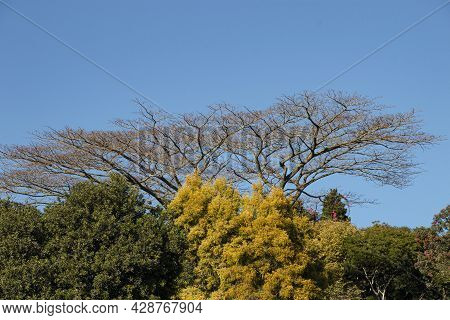 Leafless Tree Surrounded By Varying Autumn Colours