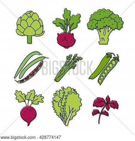 Vegetable And Herbs Sketch. Artichoke, Kohlrabi, Broccoli And Beans. Celery, Peas, Beets, Lettuce An
