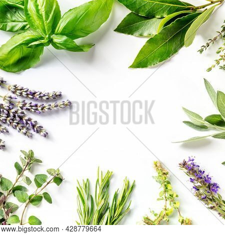 Fresh Garden Herbs Square Banner With A Place For Text. An Overhead Flat Lay Shot Of Bunches Of Herb