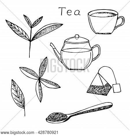 Tea Set Vector Illustration Hand Drawing Sketch Tea Leaves Cup Teapot Tea Bag And Spoon With Tea Lea