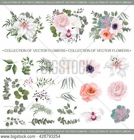 Vector Floral Compositions. White Lily, Orchids, Pink Roses, Succulent, Anemone, Asian Buttercup, Ra