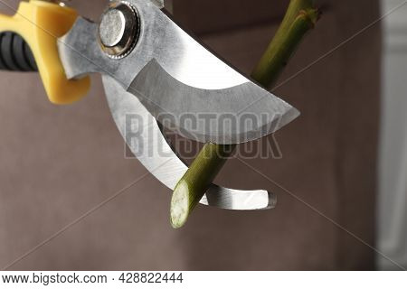 Cutting Stem Of Flower With Pruner, Closeup. Florist Occupation