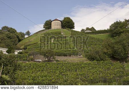 Vineyard With Hungerturm Tower, Camorino, Bellinzona, Canton Of Ticino, Switzerland