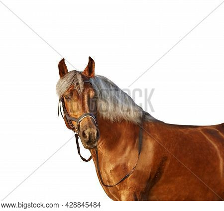 Portrait Of A Horse With Light Mane On A White Background