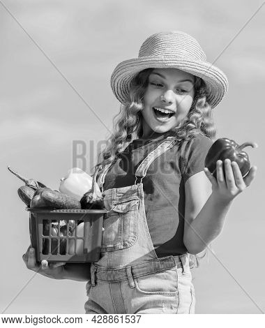 Organic Food. Sunny Day At Farm. Vegetables In Basket. Girl Adorable Child Farming. Child Carry Harv