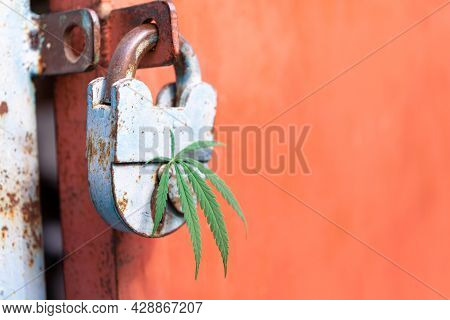 A Cannabis Leaf In The Keyhole Of An Old Padlock On A Red Background. The Concept Of Hacking Conscio