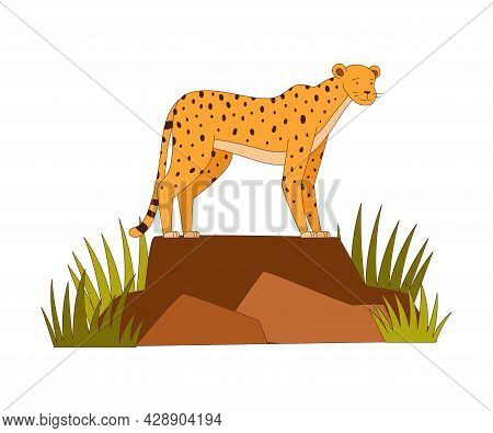 Spotted Cheetah Standing On Rock As African Animal Vector Illustration