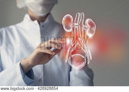 Female Doctor Touches Virtual Kidneys And Bladder In Hand. Blurred Photo, Handrawn Human Organ, High