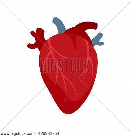 Cardiology Human Heart Icon. Flat Illustration Of Cardiology Human Heart Vector Icon Isolated On Whi
