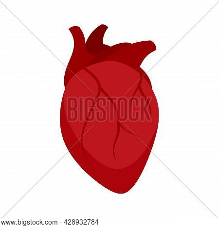 Muscle Human Heart Icon. Flat Illustration Of Muscle Human Heart Vector Icon Isolated On White Backg