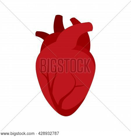 Organ Human Heart Icon. Flat Illustration Of Organ Human Heart Vector Icon Isolated On White Backgro