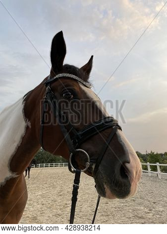 Portrait Of Brown And White Spotted Horse In Paddock Against Background Of Wooden Fence And Sky.
