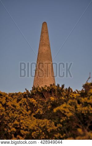 Beautiful Closeup Evening View Of Killiney Obelisk And Wild Yellow Gorse (ulex) Flowers Growing Ever