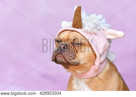 Grumpy French Bulldog Dog With Wearing A Funny Knitted Pink Unicorn Hat Costume In Front Of Purple B