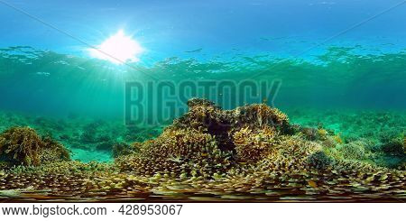 Underwater Colorful Tropical Fishes. Wonderful And Beautiful Underwater Colorful Fishes And Corals I