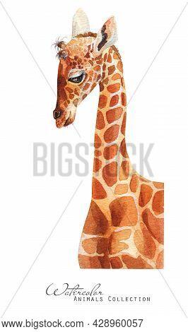 Baby Giraffe Watercolor Illustration. Little Giraffe  Portrait
