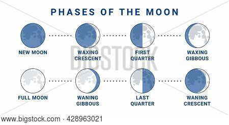 Moon Phases Concept. The Whole Cycle From New Moon To Full Moon. Vector Illustration