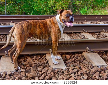 The Dog On The Tracks