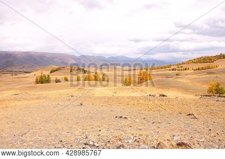 Hilly Autumn Steppe With Rare Yellowed Larch Trees At The Foot Of The Mountain Range.