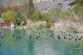 Ducks gather together at a pond in Whitewater Canyon near Palm Springs, California. poster