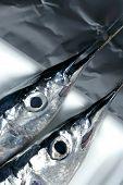 Two little needle fish uncooked macro studio shot poster