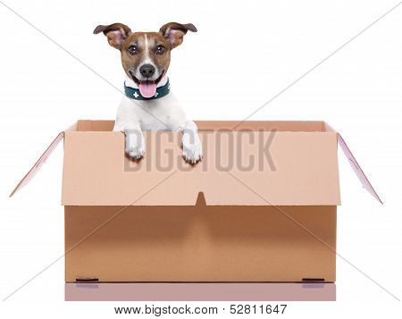 mail dog in a moving very big moving box poster