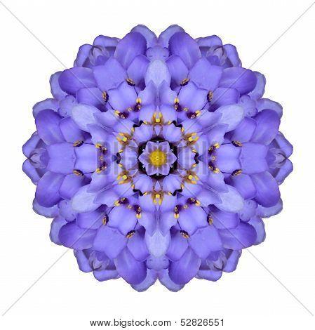 Mandala Flower Isolated Blue Iberis Kaleidoscope