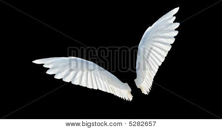 Isolated two white wings with black background poster