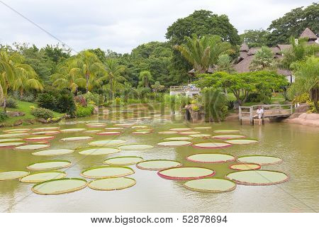 Tropical landscape with pond and trees