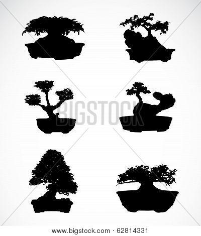 Set Of Trees In Pots